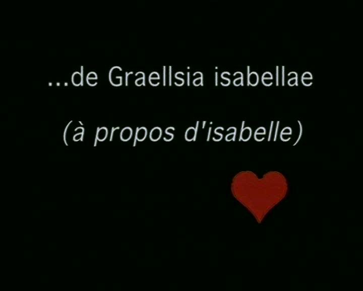 ... de Graellsia isabellae (à propos d'Isabelle)