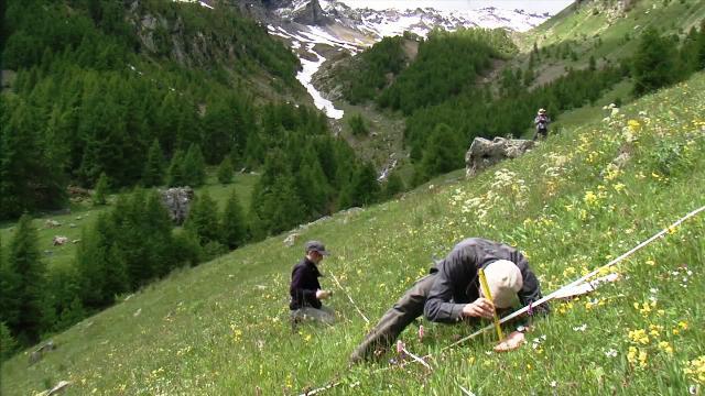Alpages sentinelles