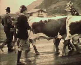 Aperçu de la vie rurale dans les Alpes autrichiennes et suisses