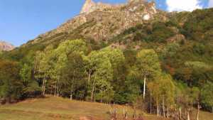 Forêts en Valgaudemar