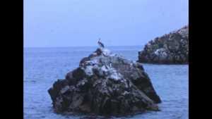 Rocher aux oiseaux (Le)