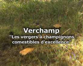 """Verchamp """" Les vergers à champignons comestibles d'excellence"""""""