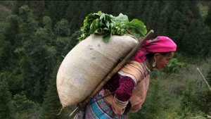 Toa cavalier Hmong
