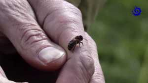 Conservatoire de l'abeille noire