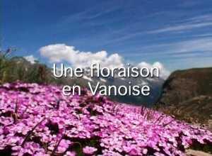 Une floraison en Vanoise